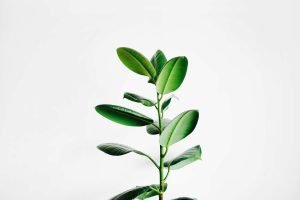Rejuvenating Star Ingredient Adenosine